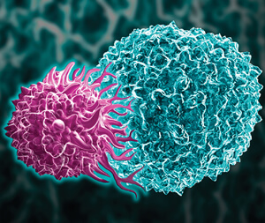 ADJ8AX Ilustration of a cytotoxic T cell (purple), also called a CD8 T or killer T cell, investing a tumor cell.