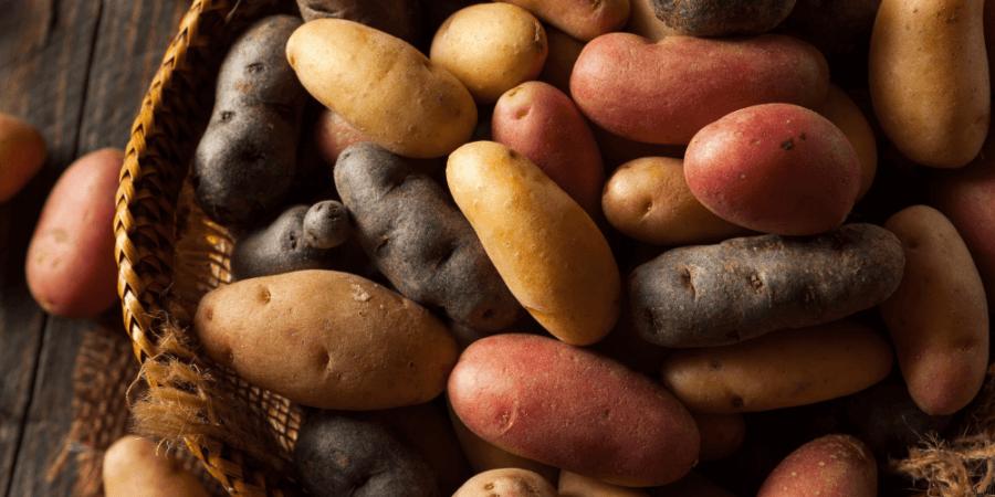 從馬鈴薯看生物多樣性