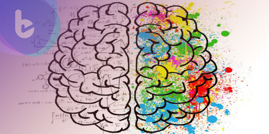 人類幹細胞培養迷你大腦 將有助理解神經系統疾病成因