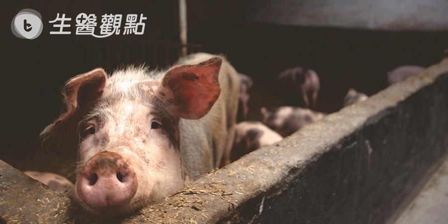 離島防疫戰再起! 生熟豬肉均禁運
