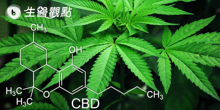 澳洲研究:大麻萃取物有潛力成為新一代抗生素