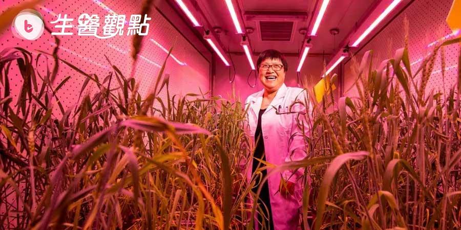 為了養活14億人口,中國加大對基因編輯農作物的投入