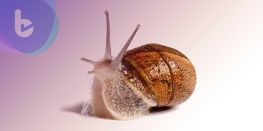 蝸牛黏液不只可做面膜,還可望成為新的抗癌化合物