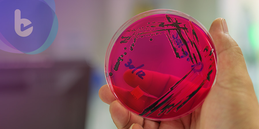 抗生素也會失靈嗎?英科學家:原來細菌用了金蟬脫殼之計