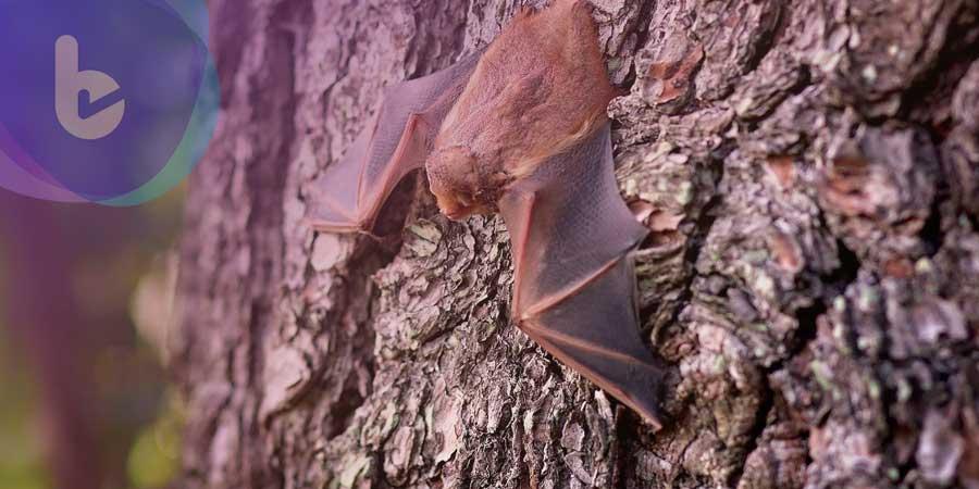 台師大:部分人畜共通傳染病由蝙蝠引發 需特別注意