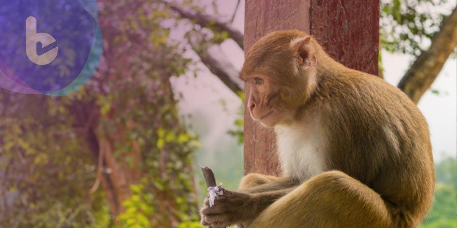 科學家研究:猴子施打DNA疫苗可預防SARS-CoV-2感染,感染後可預防再次感染
