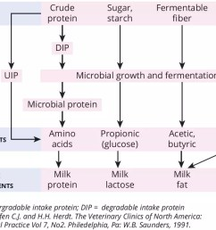 the different fermentation products from those microbes determine the composition of the milk including milk protein milk lactose and milk fat figure 1  [ 966 x 882 Pixel ]