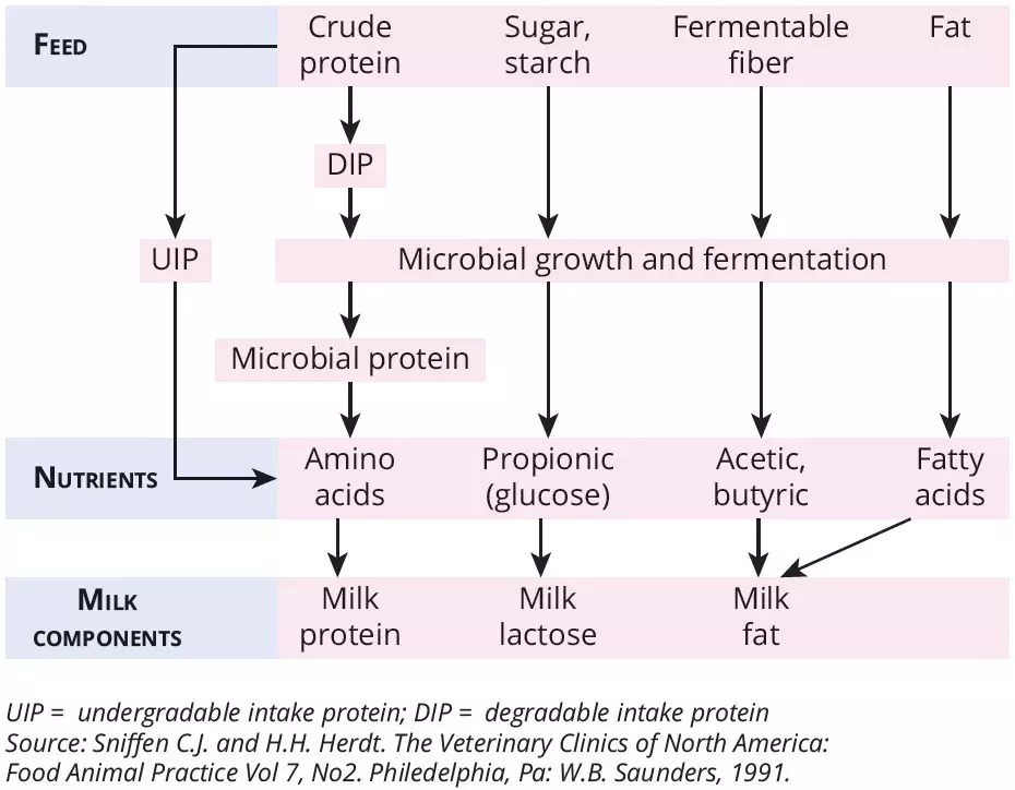medium resolution of the different fermentation products from those microbes determine the composition of the milk including milk protein milk lactose and milk fat figure 1