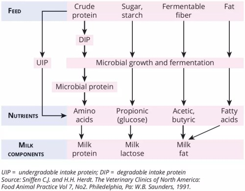 small resolution of the different fermentation products from those microbes determine the composition of the milk including milk protein milk lactose and milk fat figure 1