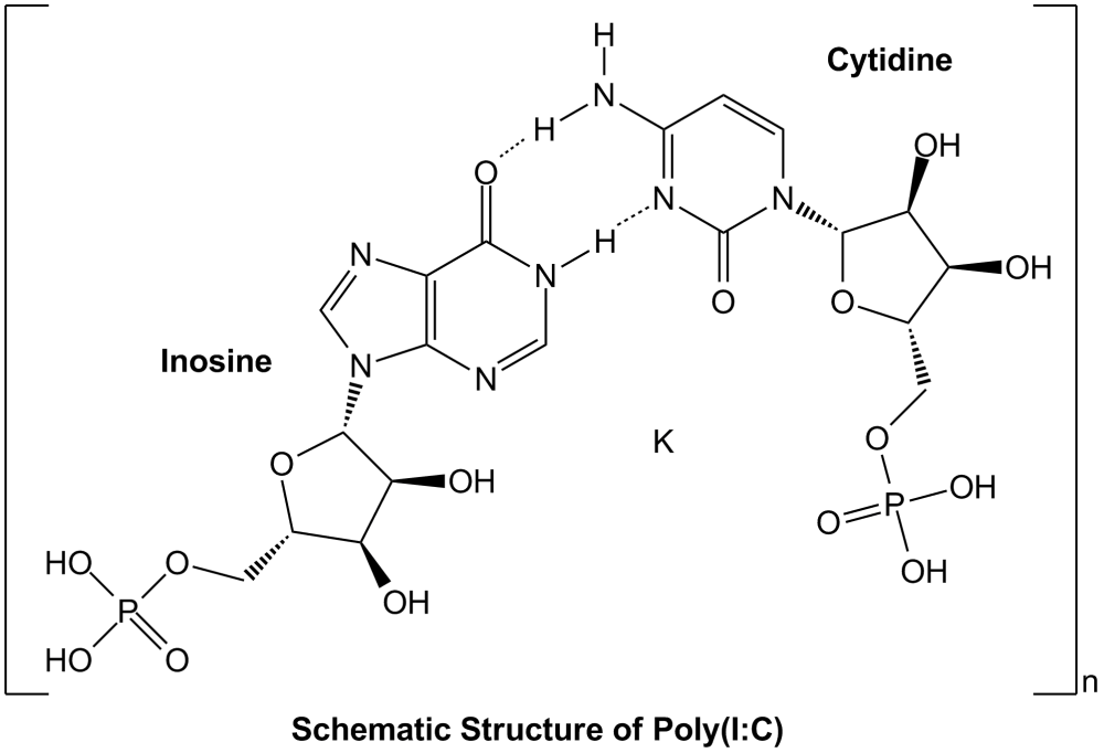 medium resolution of polyinosinic polycytidylic acid poly i c endotoxin free sterile innaxon biomol com