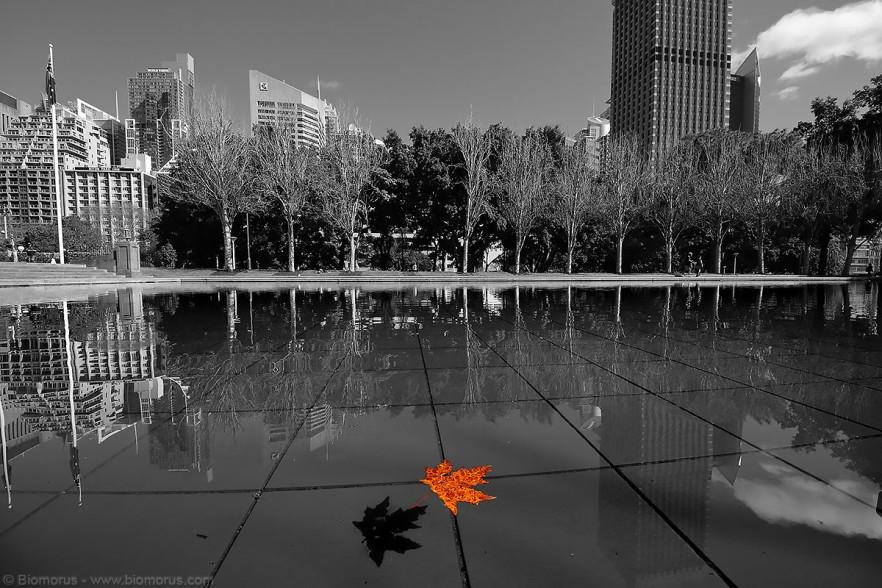 Pool of Reflections – (Dati di scatto: Canon EOS 7D, Sigma 8-16 f/4.5/5.6 DC HSM, 1/800 sec, f/8, ISO 400, meno libera).