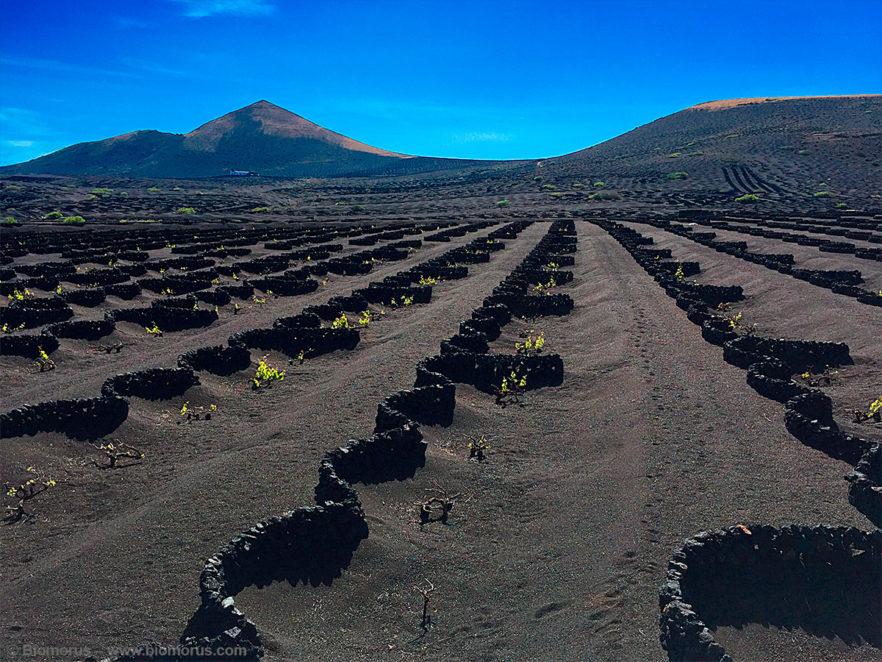 Foto 13 - La Geria (Lanzarote, Isole Canarie, Spagna) - (Dati di scatto: iPhone 6, 1/1980sec, f/2.2, ISO 32, mano libera).