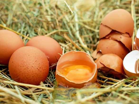 E like… Eggs! | J jak… jajka!