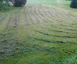 mulching-efforts gone bad