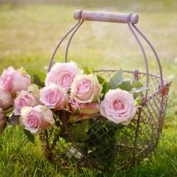 La rose éternelle pour embellir l'intérieur écolo