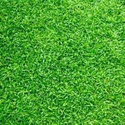 La toiture végétalisée : bonne ou mauvaise idée ?