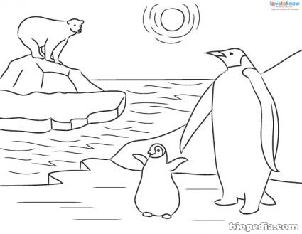 Antarctic Animals Coloring Pages Coloring Coloring Pages