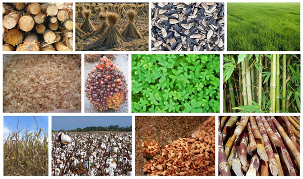 Do You Know What The Biomass Pellets Energy Is