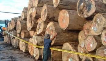 alasan mahalnya kayu jati