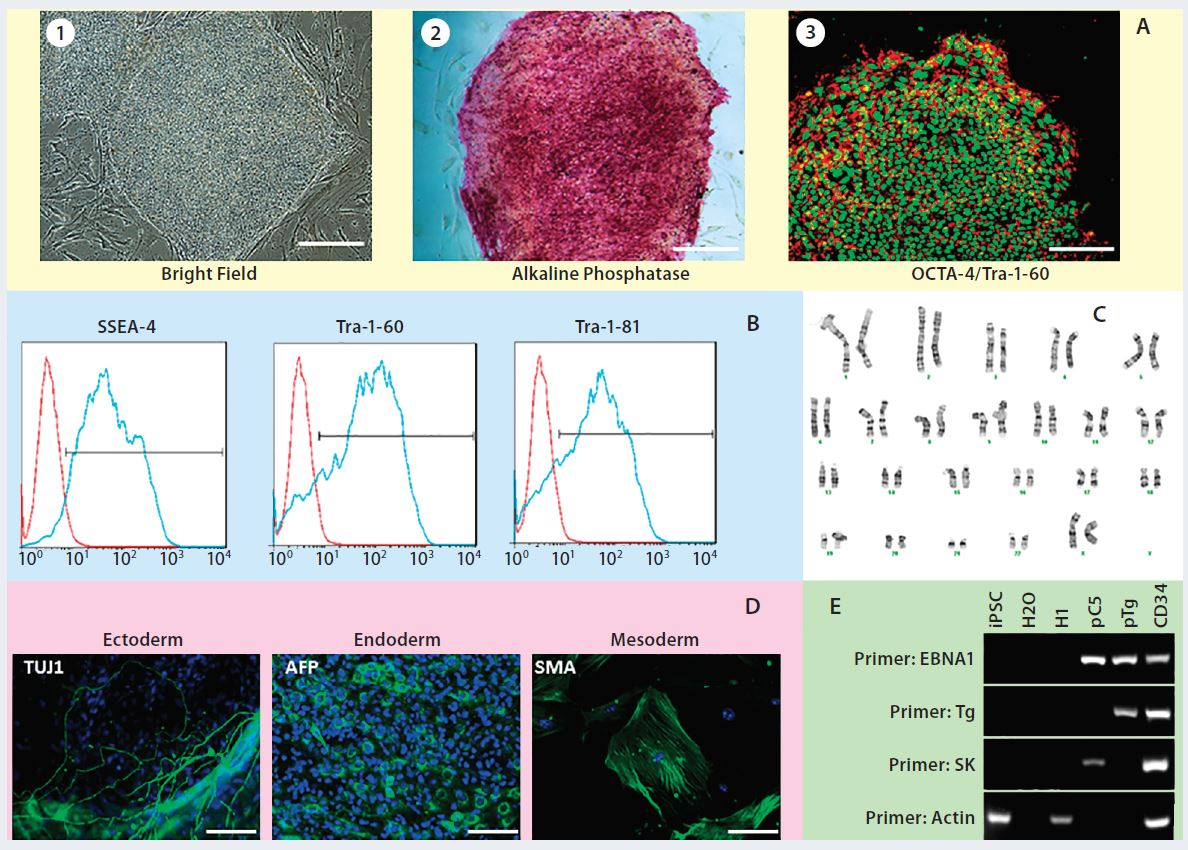 Manufacturing Human Induced Pluripotent Stem Cells For Clinical Application