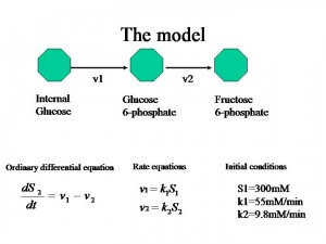 SCOPE 2009 » Mathematics for Biology from a Biologist's