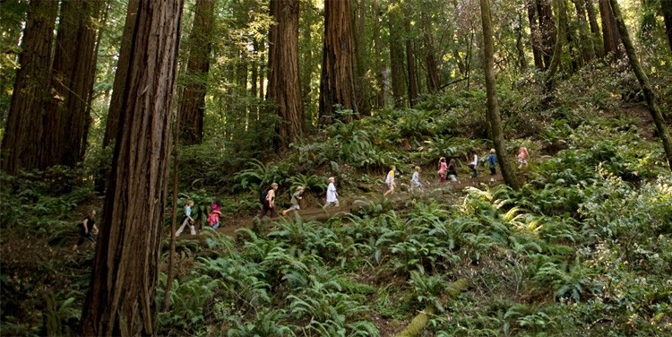 Students at the Muir Woods national monument