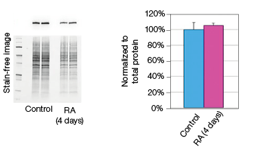 fig-03a-constant-expression-of-gapdh-rna-and-protein-levels-05