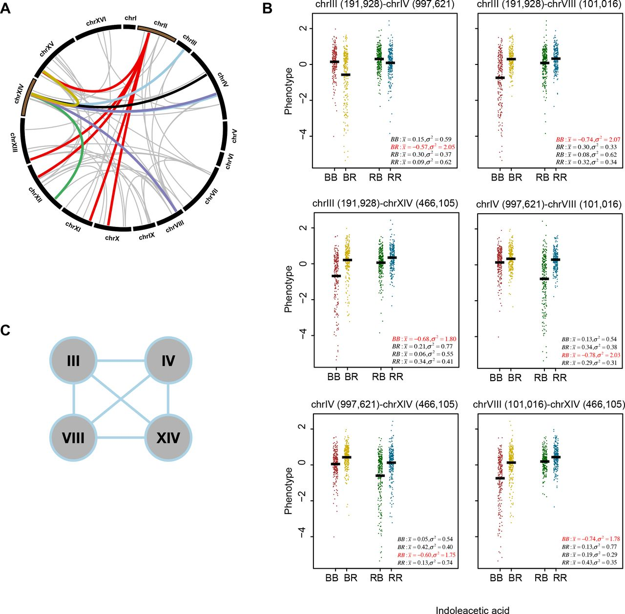hight resolution of unraveling the genetic architecture of cryptic genetic variation biorxiv