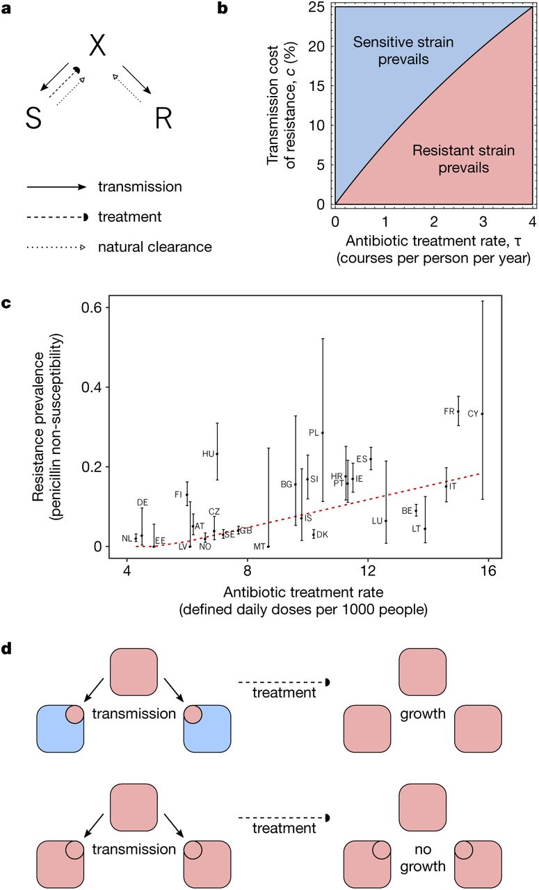 within host dynamics explain the coexistence of antibiotic sensitive and resistant bacteria biorxiv [ 1094 x 1280 Pixel ]