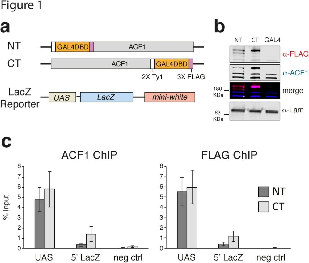 medium resolution of illustration based on a diagram by lehman marks phd used with chrac acf contribute to the