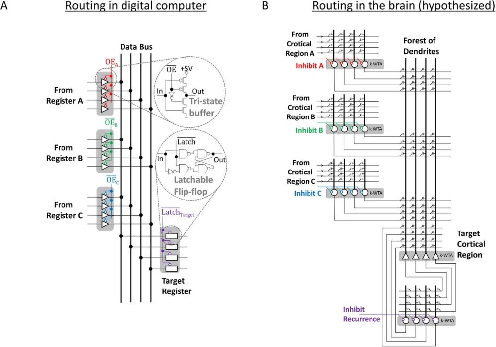 medium resolution of how thalamic relays might orchestrate supervised deep training andnorton glue systems wiring diagram 9