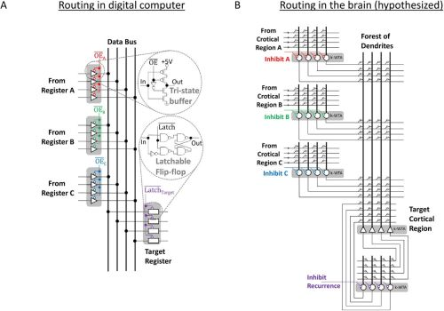 small resolution of how thalamic relays might orchestrate supervised deep training andnorton glue systems wiring diagram 9
