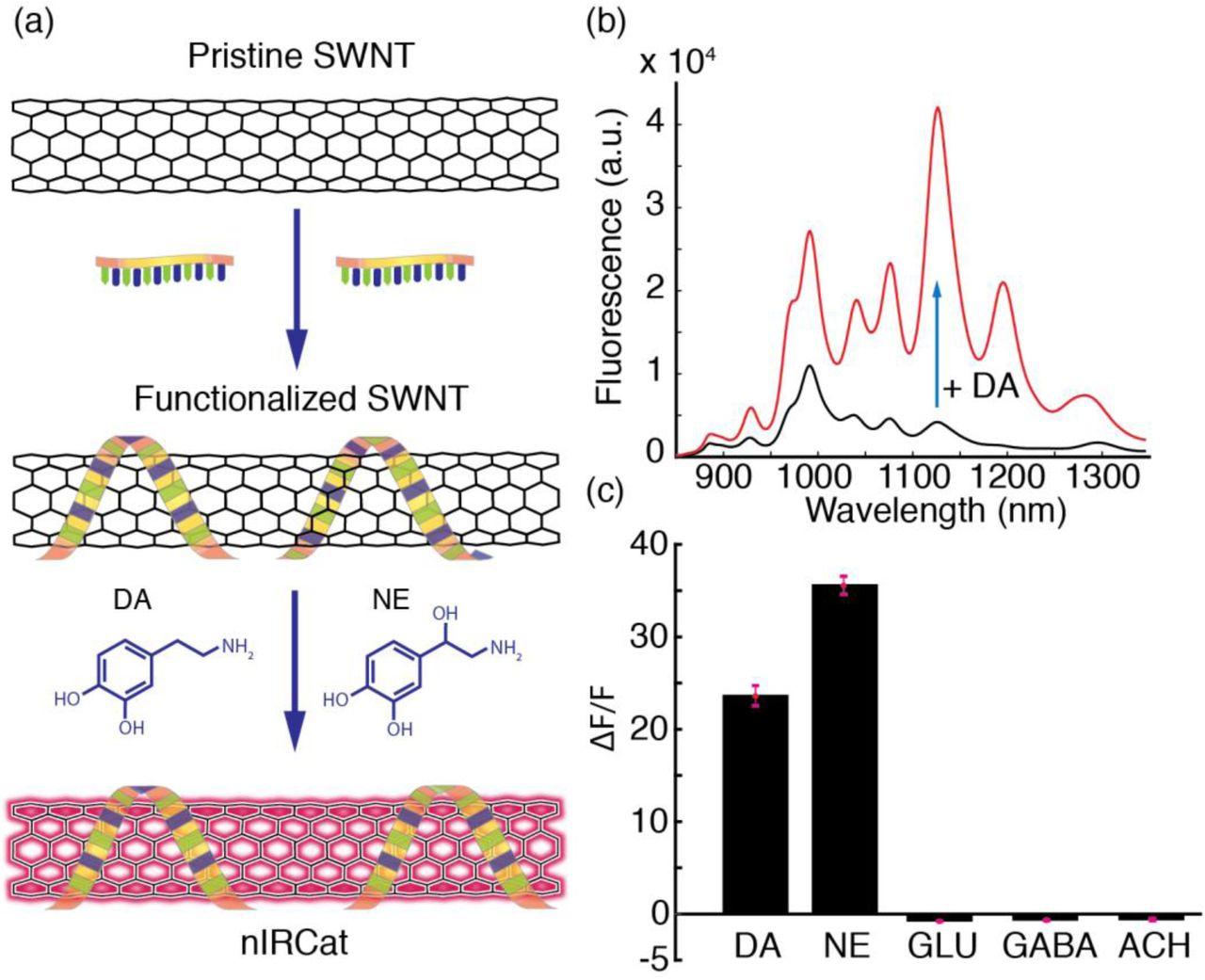 small resolution of a near infrared dopamine and norepinephrine nanosensor