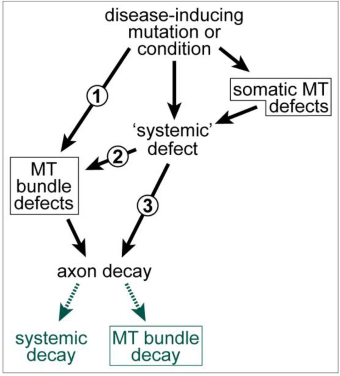 Somatic Sensory And Motor Pathways Wiley