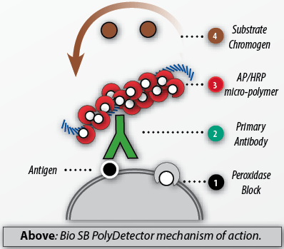Bio-SB-PolyDetector-MOA