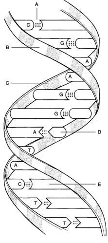 New Page 0 [www.biosciguy.com]