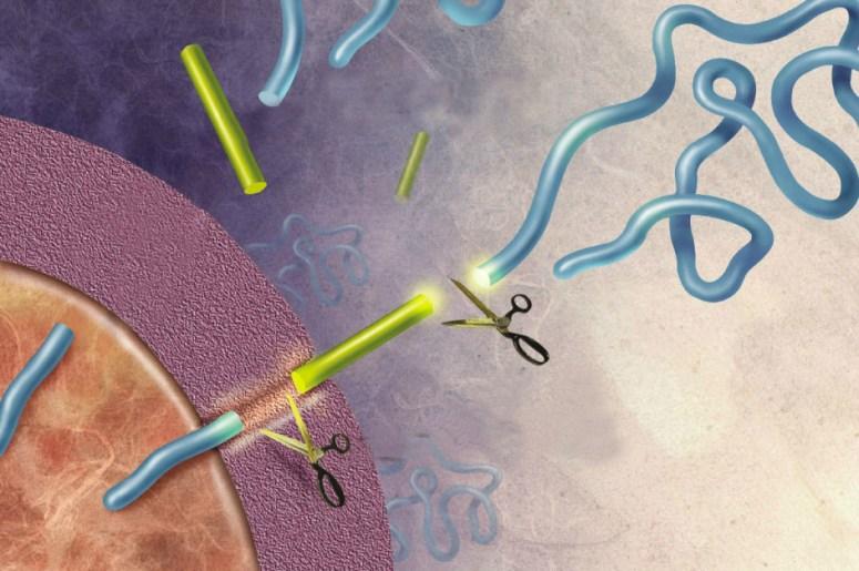 Amyloid Precursor Protein Signals Stem Cells | BioSerendipity