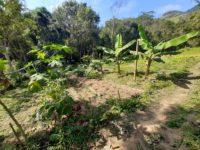 Produção de alimentos no sistema agroecológico, em propriedade atendida pelo IBS no Conexão Mata Atlântica.