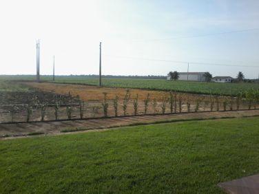 Área de plantio