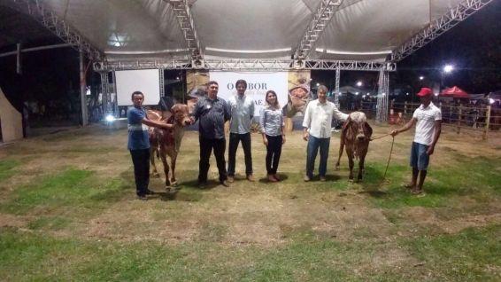 Apresentação dos bovinos do Empório dos Animais