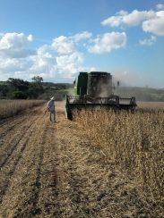 Colheita na propriedade do agricultor André Rodrigues, em Amambai.