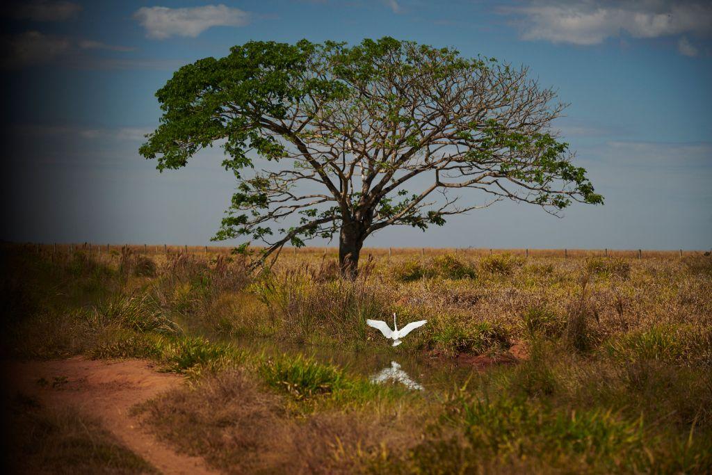 A Fazenda Roncador tornou-se referência em sustentabilidade. (Fotos: Marcos Lopes/ Roncador)