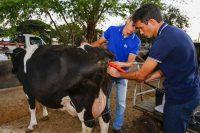 Técnicos monitoram saúde dos animais e sucesso de prenhez