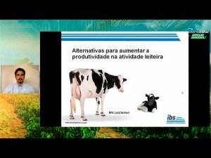 Saiba como aumentar a produtividade na pecuária leiteira