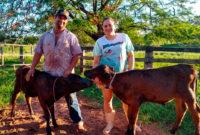 Produtor Roberto Sabatini e a esposa mostram duas crias nascidas  de IATF