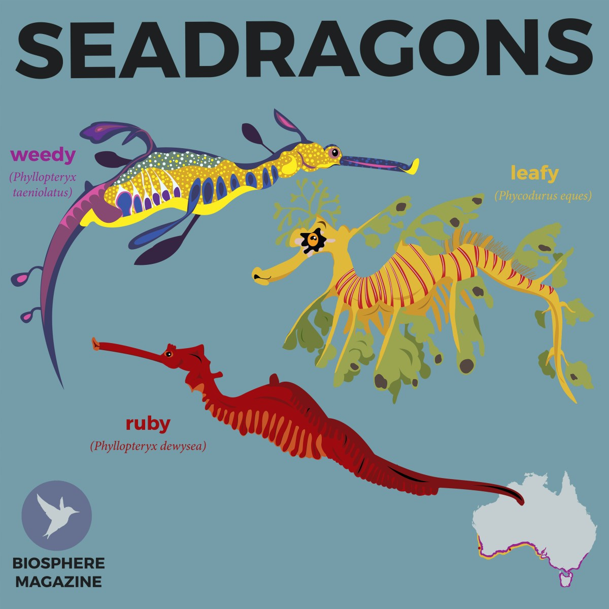 Meet the Seadragons - Biosphere Magazine