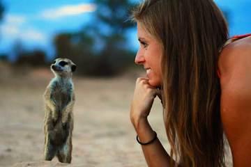 meerkats600