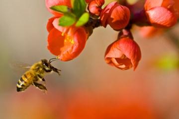 Pollinationn