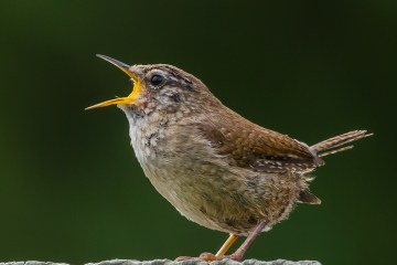 Bird populations climate change