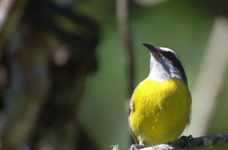 Flightless bird evolution